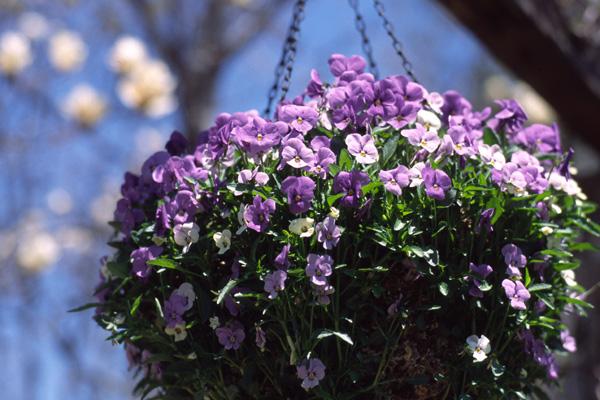 春の信州へ 2006(1) -バラクラ編-_b0043304_23431036.jpg