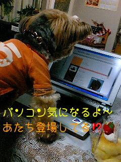 f0040805_1641532.jpg