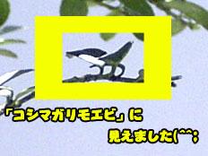 b0044726_082256.jpg