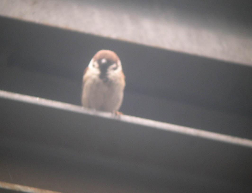 週末の鳥類園(2006.5.6~7)_e0046474_22314892.jpg