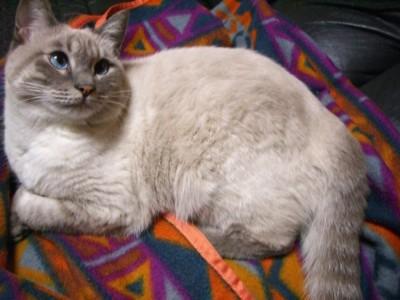 野良猫⇒地域猫  その7_c0006826_804761.jpg