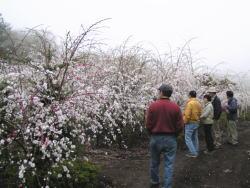 花桃の里とハーバルノート_f0019247_16241622.jpg