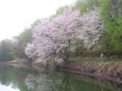 花桃の里とハーバルノート_f0019247_16243133.jpg