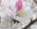 花桃の里とハーバルノート_f0019247_16273025.jpg
