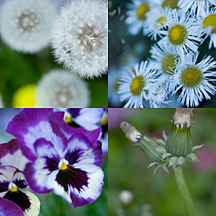 In spring_a0002672_271723.jpg