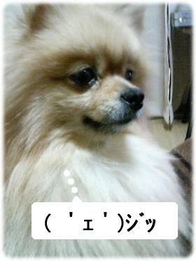 b0078073_1162135.jpg