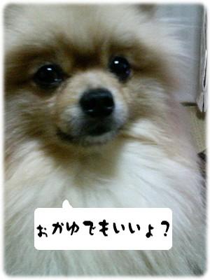 b0078073_1163557.jpg