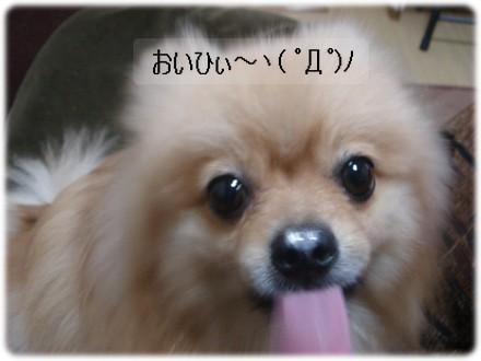 b0078073_1202691.jpg