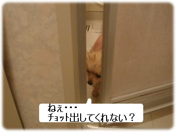 b0078073_22324660.jpg