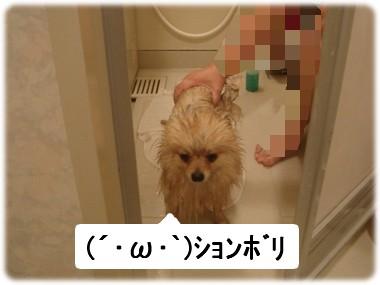 b0078073_223317.jpg