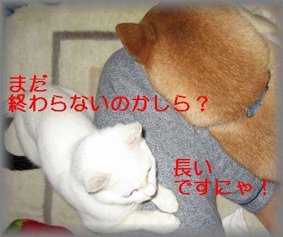 e0085147_0384319.jpg