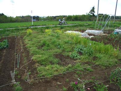 家庭菜園本格稼働_c0063348_19533662.jpg