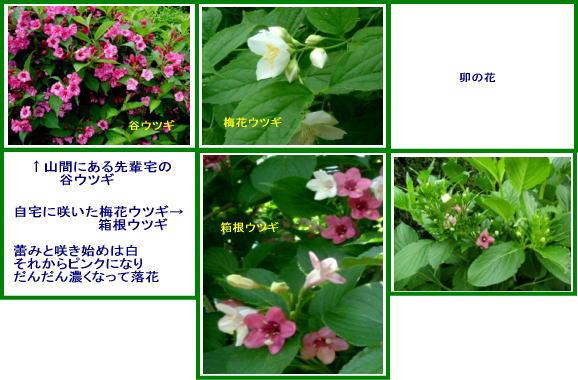 f0017559_11584651.jpg