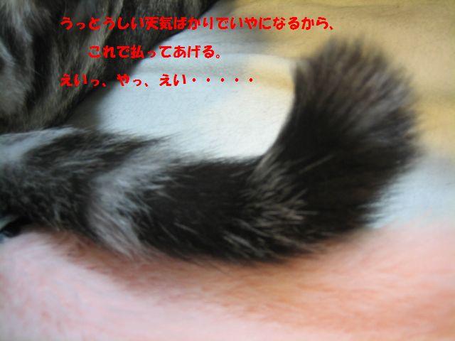 b0054391_13531458.jpg
