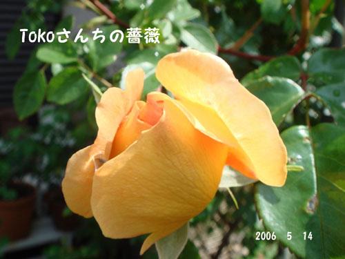 f0057006_13365189.jpg