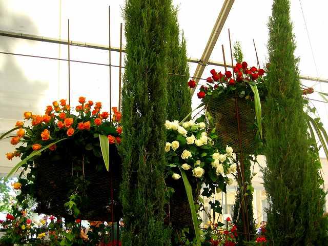 San Feliuのバラ展示会_b0064411_731534.jpg