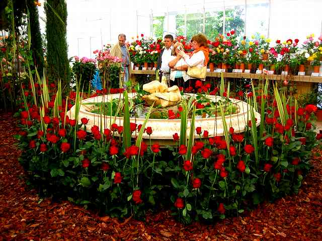 San Feliuのバラ展示会_b0064411_7333011.jpg