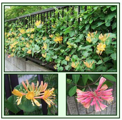 お花がいっぱい_c0073016_1353312.jpg