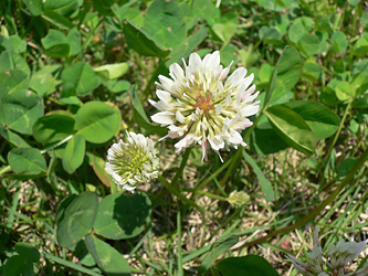 白い花 06-10_c0069048_853849.jpg