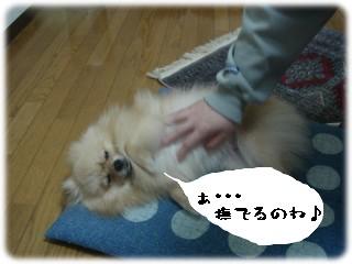 b0078073_035957.jpg