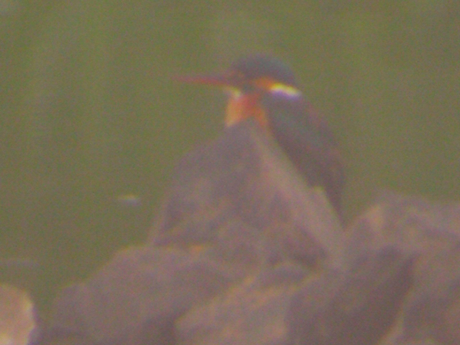 週末の鳥類園(2006.5.13~14)_e0046474_9583296.jpg