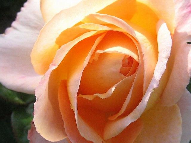 セルバンテス公園のバラたち  4_b0064411_21125685.jpg