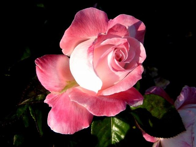 セルバンテス公園のバラたち  4_b0064411_21141276.jpg