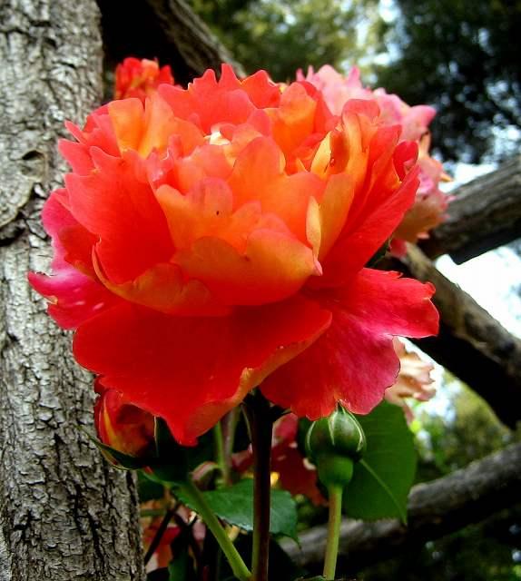 セルバンテス公園のバラたち  4_b0064411_21202.jpg