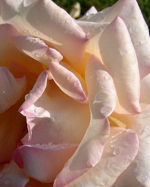 セルバンテス公園のバラたち  4_b0064411_2152425.jpg