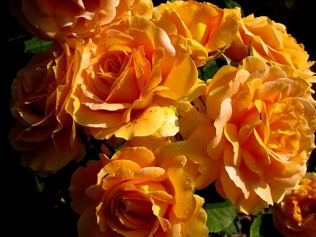 セルバンテス公園のバラたち  4_b0064411_2195027.jpg
