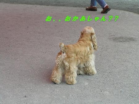 b0067012_39330.jpg