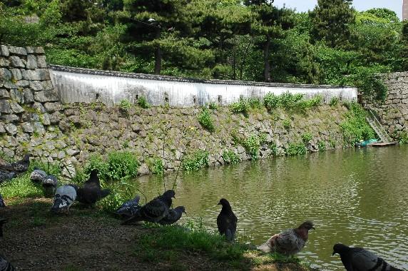 和歌山城  3  ( 狭間 )_b0093754_20402912.jpg