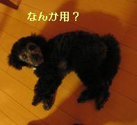 b0073589_1222490.jpg