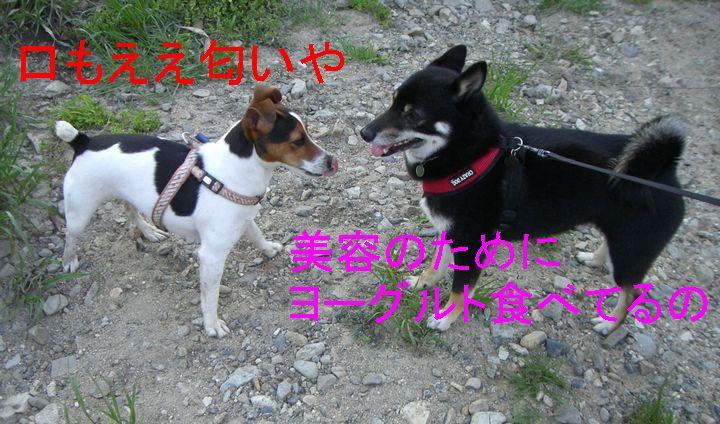 f0053952_125178.jpg