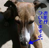 b0069169_1683736.jpg