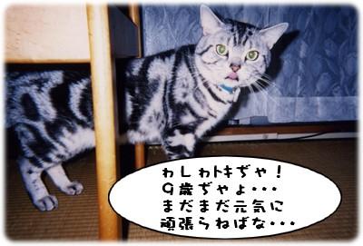 b0078073_19123673.jpg