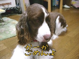 a0040103_20163832.jpg