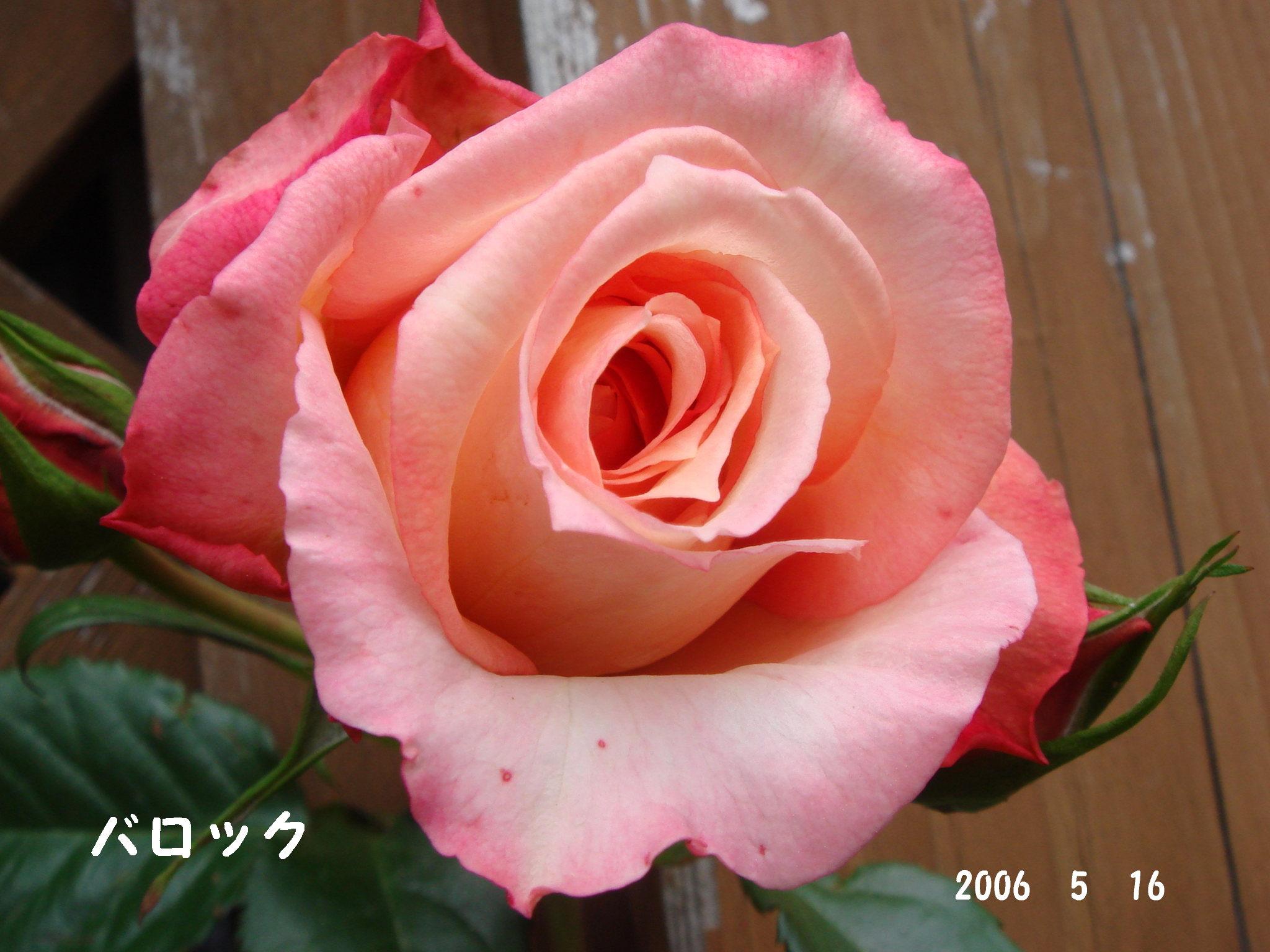 f0057006_17101036.jpg