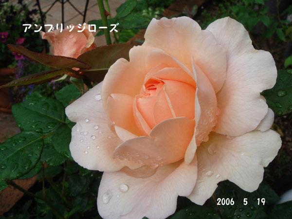 f0057006_1732366.jpg