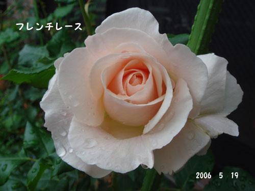 f0057006_1734227.jpg