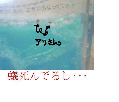f0061474_1640433.jpg
