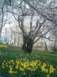 FlashBack#3 ~NYの春~_f0009746_8195220.jpg