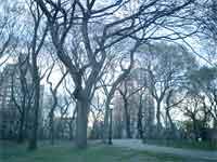 FlashBack#3 ~NYの春~_f0009746_891439.jpg