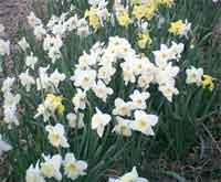 FlashBack#3 ~NYの春~_f0009746_894094.jpg