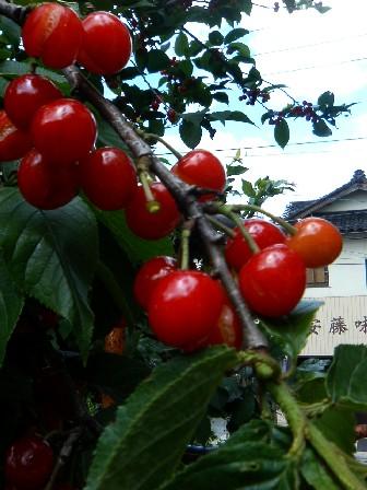 初夏の花_f0053218_2013113.jpg