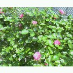 a0046888_21585759.jpg