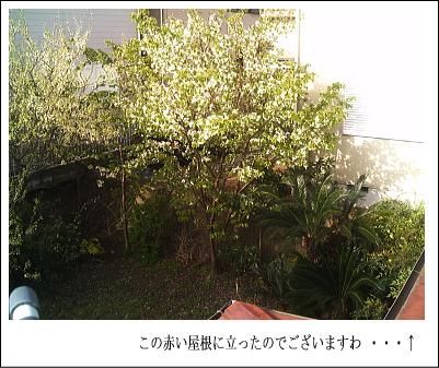 d0046294_1754106.jpg