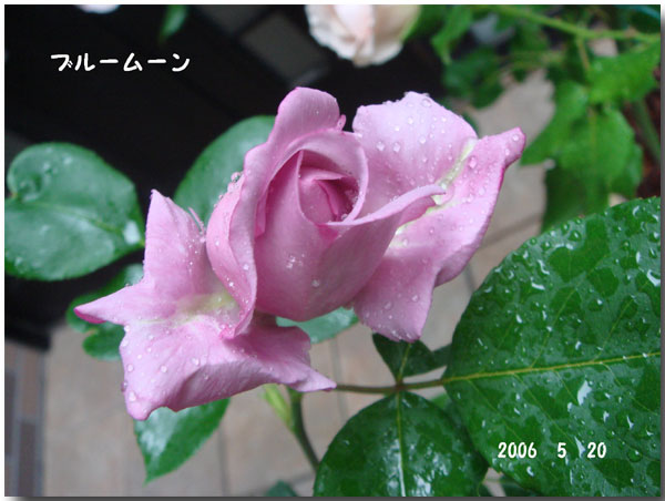 f0057006_1455537.jpg