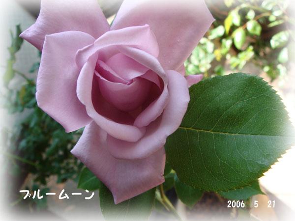 f0057006_1461895.jpg