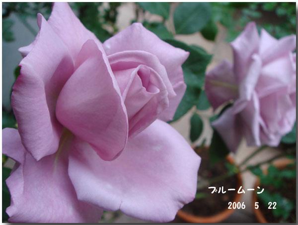 f0057006_1464963.jpg